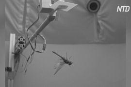 Нове дослідження: бабки відновлюють баланс, роблячи сальто назад