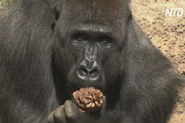 Лос-анджелеський зоопарк знову відкривається після карантину