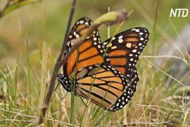 У Мексиці до заповідника повернулися комахи, але відвідувачів майже немає