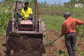 Конголезький біженець вирощує африканські овочі в Австралії