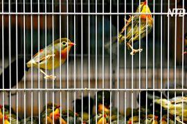 Париж закриє старовинний пташиний ринок XIX століття