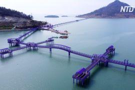 Два острови Південної Кореї стали фіолетовими, щоб привабити туристів