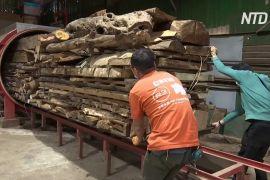 Гонконгські столяри дають друге життя спиляним деревам