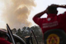На північному сході Мексики палає масштабна лісова пожежа