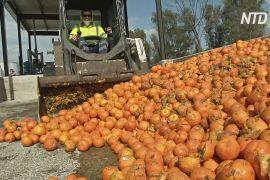 В Іспанії електроенергію добувають з апельсинів