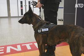 Італія залучить до боротьби з COVID-19 собак-шукачів