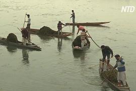 Знамените озеро Дал у Кашмірі очищають від сміття й бур'янів