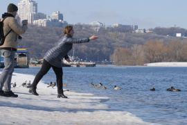 Екологи закликають годувати диких качок