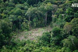 Колумбія рятує ліси й планує зменшити вирубування на 30 % до 2022 року