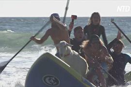 Цапи-серфінгісти навчають каліфорнійських дітей не боятися води