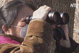 Поспостерігати за птахами в Центральному парку: жителі Нью-Йорка запасаються біноклями