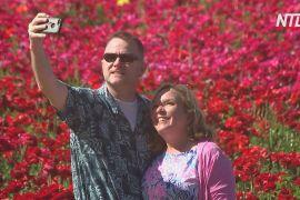 У Каліфорнії квітучі поля жовтцю приваблюють туристів