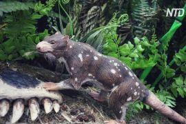 У Чилі знайшли скам'янілість раніше невідомої тварини віком 74 млн років