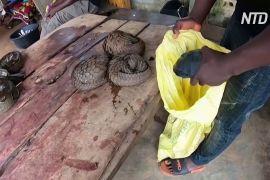 ВООЗ закликає тимчасово заборонити торгівлю дикими тваринами на ринках