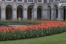 Біля лондонського палацу Гемптон-Корт проходить фестиваль тюльпанів