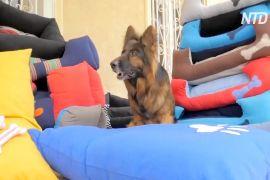Єгиптянки шиють лежаки для собак і допомагають своїм сім'ям та притулкам для тварин