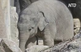 Слоненя в мюнхенському зоопарку пізнає світ і насолоджується теплою погодою
