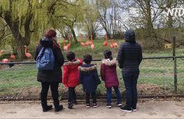 Відвідувачі знову заполонили зоопарки Англії