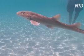 Дубайські зоозахисники випустили в океан скатів і акул
