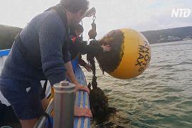 Акустичний моніторинг допоможе стежити за рибою в Ла-Манші