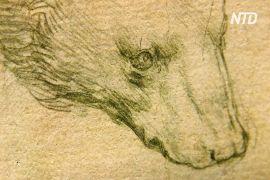 Малюнок голови ведмедя, який створив Леонардо да Вінчі, можуть продати за 16 мільйонів доларів