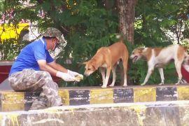 Індійці під час локдауну годують бродячих собак і корів