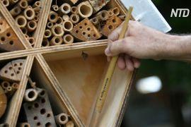 У Колумбії роблять бамбукові готелі для бджіл