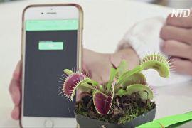 Сінгапурські науковці керують рослинами через застосунок у смартфоні