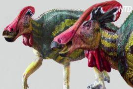 Мексиканські науковці відкрили новий вид динозаврів
