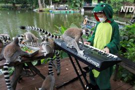 Музика для звірів: тайські школярі виступають у зоопарку