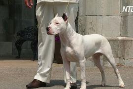У Вестмінстерському дог-шоу братиме участь ще чотири породи собак