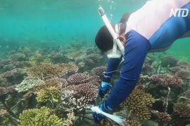Індонезійка допомагає відновити коралові рифи Балі