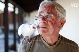 Дідусь і птах: секрет дружби людини й голуба