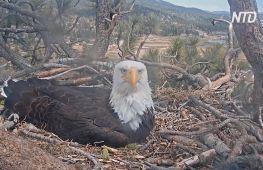 Американці стежать за життям пташиних сімей через камери