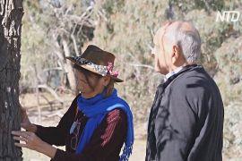 Австралійка зберігає сандалові дерева для майбутніх поколінь