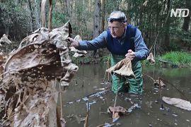 Австралієць навчився спілкуватися з жабами і знаходити їх у природі