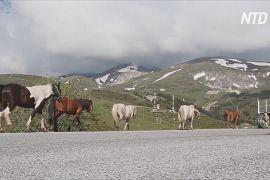 Мальовничий гірський район Північної Македонії стане національним парком