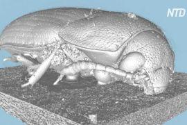 Зацифровувати комах почали в лондонському музеї