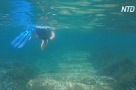 Давня підводна гавань: Кіпр запрошує дайверів
