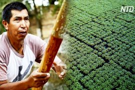 У Мехіко рятують від загибелі ацтекські чинампи