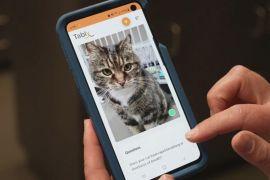 Новий застосунок розшифровує почуття котів