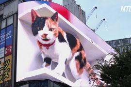 На будівлі в Токіо оселилася величезна кішка