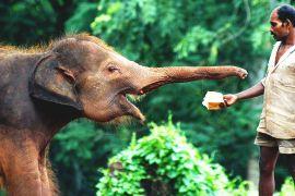 Як в Індії та Кенії відзначають Всесвітній день слонів