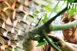 Зв'язок із предками: австралійка знайшла себе завдяки плетінню з виноградної лози