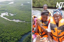 Як мангрові ліси рятують села