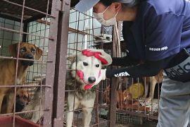 У Південній Кореї суворіше каратимуть за жорстоке поводження з тваринами