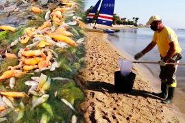 20 тонн мертвої риби прибило до іспанського узбережжя