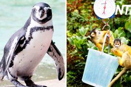 Ваги й рулетки: у Лондонському зоопарку вимірюють і зважують його мешканців