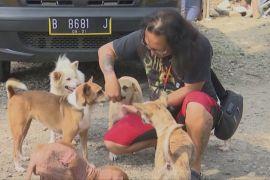 Волонтери рятують тварин, які через COVID залишилися самі