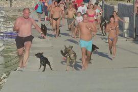 «Собакотлон»: собаки разом зі своїми господарями виборювали першість у Хорватії